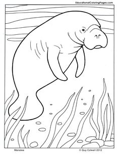Manatee Coloring Page Manatee Worksheets and Craft