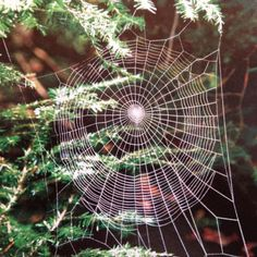 Spider Spiders Web #spider #spiders #web