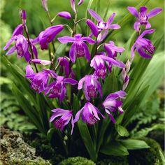 orchidée purple   Il y a 0 produits dans votre panier. Il y a 1 produit dans votre ...