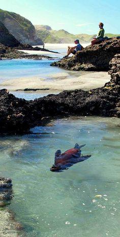 Baby seal playing in Wharaiki Beach pool - NZ