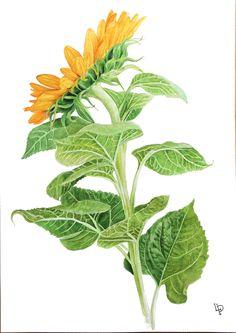 Botanical Illustrations on Behance