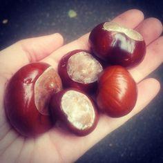 .@dingevonheute | Heute ein wenig H wie Herbstsammelei für das #abcfee :-) Der Herbst ist einfa...