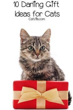 Looking for some great gift ideas for cats? We've come up with 10 darling ideas that are perfect for holidays, birthdays & more! Take a peek!
