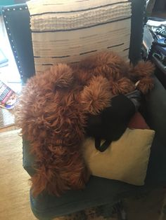 Fluffy pupper sleeping upside down on a chair.#dogs #kitty #lovecats #kittens #animals #ねこ #animal #kitten #cat #pets #ilovemycat #love #catoftheday #happynewyear #adorable #catlover #pet #meow #猫 #cute #pinterest
