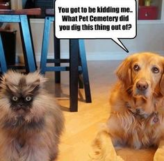 Funny Dogs with Captions | Funny pictures w/ captions-602792_10200933303960063_680601622_n.jpg #funnydogwithcaptions