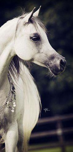 Lovely Arabian Profile.