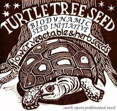 Turtle Tree Seed