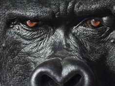Photographer Captures Incredible Human Side Of Animals