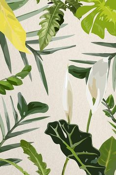 Download free image of Tropical leaf iphone wallpaper background illustration  about aesthetic background, background, aesthetic, plant, and green background 3851280
