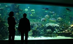 Aquarium du lagon tropical de Nausicaa