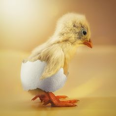 Just a shy chick by John Wilhelm on 500px