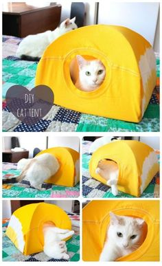 DIY No Sew Cat Tent from T-shirt #crafts, #pets, #tent