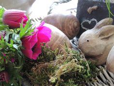 Flower-Friday, Anemonen