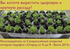 Как правильно вырастить здоровую рассаду! Это должен знать каждый! | Дачный сад и огород