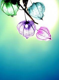 Beautiful Flowers✿ - Beautiful♥Pic✿