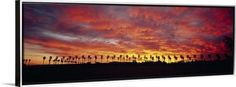 Canvas with Floating Frame entitled Silhouette of palm trees at sunrise, San Diego, San Diego County, California, Silver
