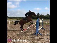 Best Video Of Horses - YouTube Videos Please, Horses, Youtube, Instagram, Horse, Youtubers, Youtube Movies