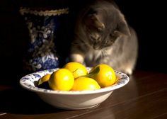21 Natural Home Remedies for Pets. did you know fleas hate citrus? #barryandrewshomesllc