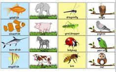Animal Sorting - Printable Activity