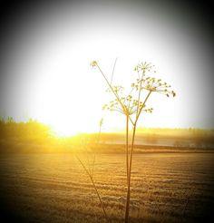 Kaltainen aamu