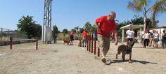 Segorbe equipa con juegos el Parque Canino
