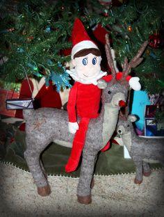 Elfie found Rudolph!