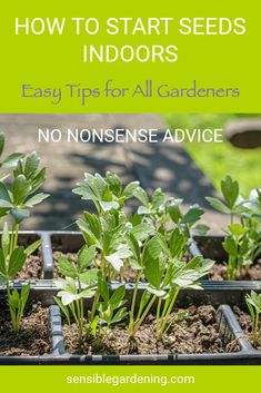 Easy tips for all levels of gardeners. Step by step, no nonsense advice for starting seeds indoor.