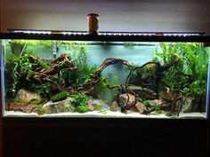 Aquarium Ideas - Complete Kits vs Individual Components - What is Better? Have You ever seen a nice looking 55 gallon? - Page 2 - The Planted Tank Forum Planted Aquarium, Nature Aquarium, Aquascaping, Coral Aquarium, Aquarium Fish Tank, Fish Tanks, Fish Tank Terrarium, Biotope Aquarium, Cichlid Aquarium