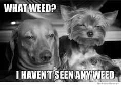 The Most Hilarious Weed Meme's Guaranteed to Make You Laugh thebestgrinder.com