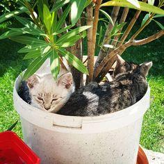 #cats#kittys#cute#photoshoot#animal#adorable Cute Animals, Photoshoot, Cats, Instagram, Pretty Animals, Gatos, Photo Shoot, Kitty Cats, Cutest Animals