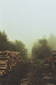 lumberyard + a place of sanctity