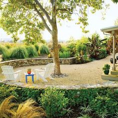 A sycamore takes center stage in this lawnless California yard. Shade created by the tree keeps the patio cool while permeable paving, potted plants, and other design details keep watering to a minimum. Photo: Norm Plate, Sunset.com