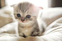 I'm not a cat person, but this kitten is adorable!