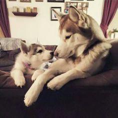 Eskimo kisses!