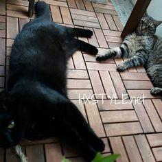 KOTI&SISUSTUS. PUUTARHA, PARVEKE. Lemmikit, Ihanat ja Leikkisät Kissat nauttivat myös aamuisin ja iltaisin kun on viileämpää. Loikoilevat ja leikkivät omissa paikoissaan, sisällä ja  myös ulkona. Erilaisia Kissoja ja Perrsoonallisia, Tare RAIDALLINEN on pahantekijä ja CHISU Musta on rauhallisempi yleensä....HYMY. Sinnikkäästi Opetin Kissoille, Meidän Perheen tavat ja KT Elämää. KESÄ on Ihanaa aikaa, Minun&Kissojen mielestä. #blogi #koti #sisustus #elämäntäpablogi #lemmikit #kissat…