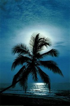 Palm by moonlight