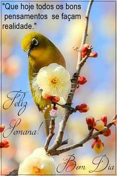 Parrot, Bird, Animals, Good Morning Wishes, Good Thursday, Good Morning Hug, Good Morning Quotes, Be Nice, Psalms