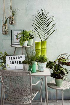 Urban Jungle, Urban Gardening mit grünen Accessoires für eure Pflanzen  Couleurs, Jardinage Urbain,