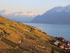 Automne, Lavaux, Switzerland, Landolia, a World of Photos Canton, Switzerland, Vineyard, Images, To Go, Coast, Wanderlust, Photos, Adventure