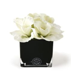 Herve Gambs - White Couture Orchid & Black Glass Cube