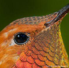 20 Beautiful Close-up Photographs of Hummingbirds | BlazePress