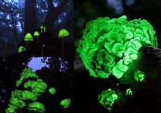 Skikoku Japan This forest glows in the dark thanks to a bunch of Luminescent Mushrooms. Mushrooms and fallen leaves emit a magical light for just a short period of time each year.