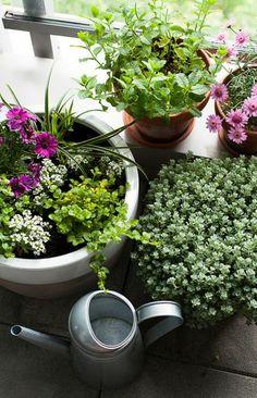 balkon zimmerpflanzen bepflanzen blumenkasten deko