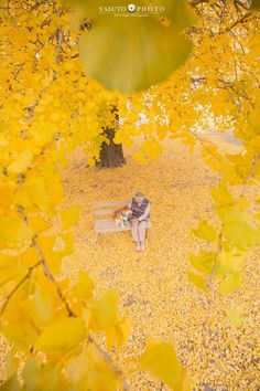 Japanese photographer Yasuto took a series of heartwarming and wholesome photos of his grandmother and her dog, a Shiba Inu. Shiba Inu, Little Panda, Akita, Autumn Leaves, Backdrops, Dog Cat, Beautiful Pictures, Cute Animals, Japanese