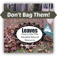 Don't Bag It - Leaf Management Plan....good plan for trench composting leaves and bag composting (add 1-2 shovelfulls of soil and either 2 shovelfulls of manure or 1/2 c of a high nitrogen fertilizer. Moisten leaves. Punch 12-15 holes. Turn the bag a few times and add water if needs moisture. Check in a few weeks, done in about 6-8 weeks.