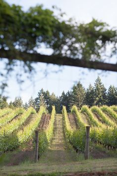 After years of planning, two new distinct AVAs have been established for vineyards located throughout the Tualatin Valley. Oregon Wine Country, Willamette Valley, Washington County, Ava, Vineyard, How To Plan, Outdoor, Outdoors, Outdoor Life