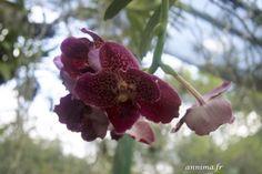 Toutes les orchidées du Costa-Rica… ou presque ! - annima.fr