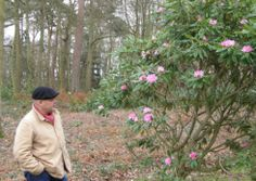 Walker Peter Miller with the rhododendron nobleanum-venustum in flower at Sheringham Park. Picture; MALCOLM FISHER, NATIONAL TRUST