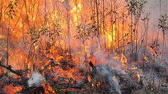 1st Prescribed Burn of Fall 2012: November. The Crosby Arboretum. Image by Sr. Curator R.Stafne