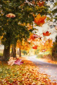 leaves #autumn